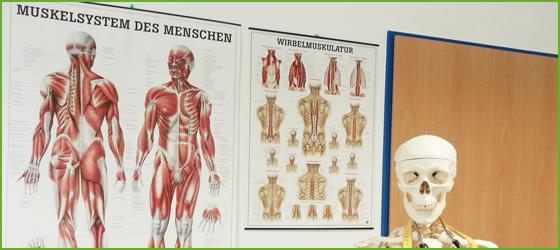 Lehrmaterial | | SCHUPP SHOP | Physio | Fitness | Wellness | direkt ...